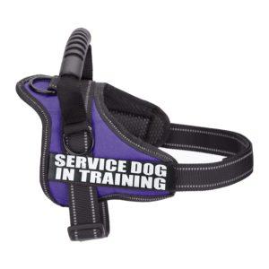 Postroj pro služebního psa – pomoc slepým lidem